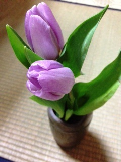 Purple_tulip