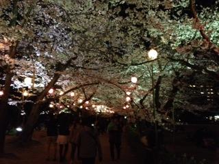 Sakura_no_tunnel